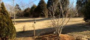 Side Yard February 16, 2014
