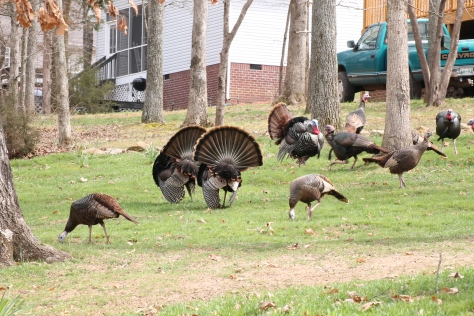 TN Turkey